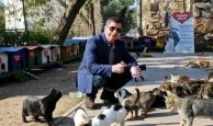 Kedi park projesi büyüyor