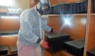 Antalya'da çam keseböceğiyle mücadele