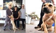Antalya'nın konuştuğu köpeği sahiplendi