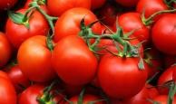 Rusya'dan sevindiren domates kararı