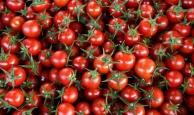 Rusya'nın 5 firmaya daha domates izni yeterli bulunmadı