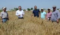 Antalya'da hasat erken başladı