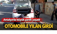 Antalya'da otomobile yılan girdi