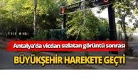 Vicdan sızlatan görüntü sonrası Büyükşehir harekete geçti