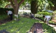 Alanya'da mezarlıklara bakım