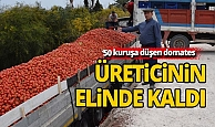 Antalya'da domates üreticinin elinde kaldı