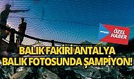 Balık fakiri Antalya, balık fotoğrafı yarışmasında şampiyon oldu!