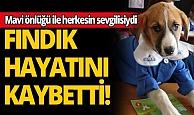Mavi önlüğüyle Türkiye'nin sevgilisi olan Fındık hayatını kaybetti