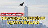 New York'un üzerinde akbabalar uçmaya başladı