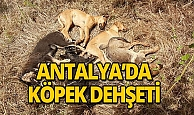 Antalya'da 5 yavru köpek ölü bulundu, 4'ü kayıp