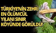 Türkiye'nin zehri en ölümcül yılanı sınır köyünde görüldü
