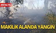 Antalya'da makilik alanda yangın çıktı