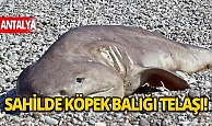 Antalya haberleri: Olta ile avlanan ölü köpek balığı sahile vurdu