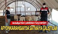 Antalya Korkuteli Haber: Jandarmadan hayvan hırsızlarına suçüstü
