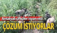 Antalyalı çiftçileri çileden çıkaran olay