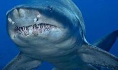 En tehlikeli köpekbalığı Antalya'da!