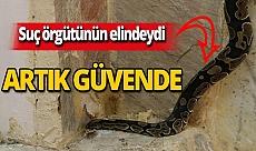 Antalya haber: Korkutmak için kullanıyorlardı, artık güvende!