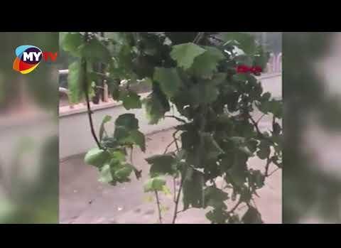 Kumluca'da şiddetli fırtına ağaçları devirdi, iş yerlerini yıktı