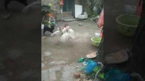 Yavru köpek kavgayı böyle ayırmaya çalıştı