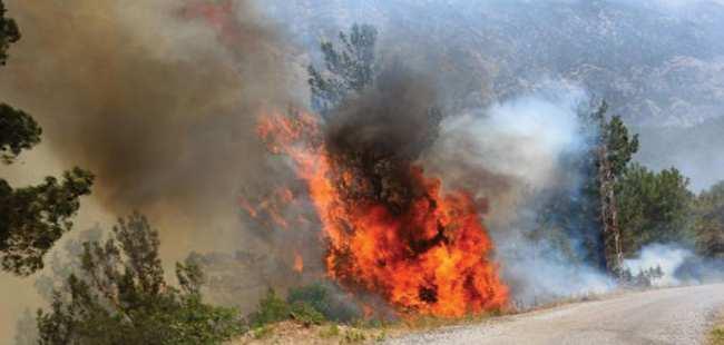 Antalya'da 2 bin 4 orman yangını