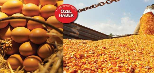 AB yumurtasındaki zehir Antalya'da ortaya çıktı !