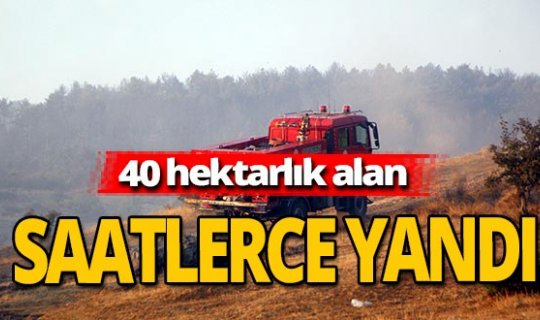 40 hektarlık alan zarar gördü