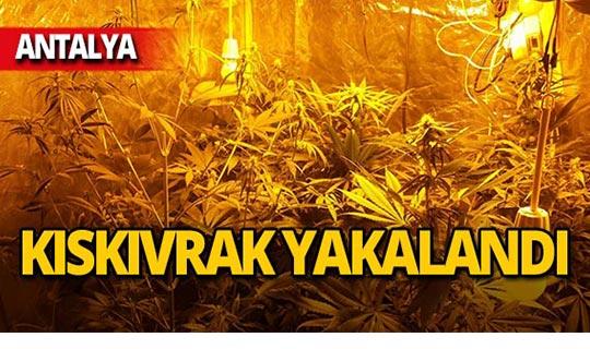 Antalya'da evine sera kurdu, kıskıvrak yakalandı!