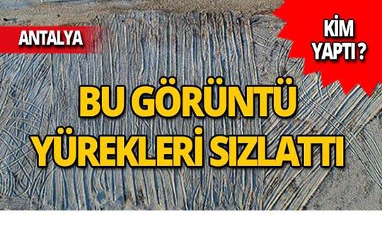 Antalya'da içler acısı görüntü!