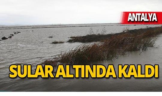 Antalya'da golf sahaları su altında kaldı