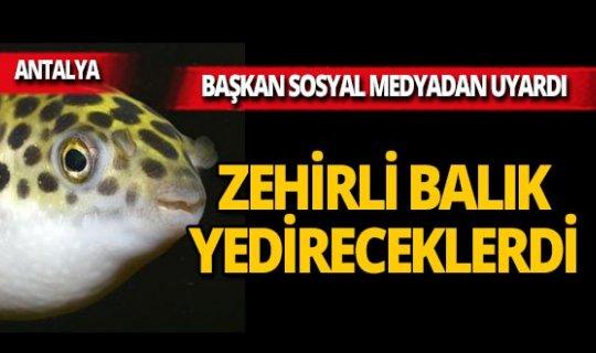 Antalya'da vatandaşa zehirli balık yedireceklerdi
