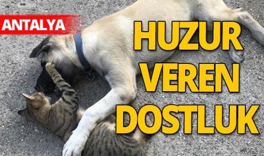 Antalya haber: Kedi ile köpeğin dostluğu görenleri şaşırtıyor