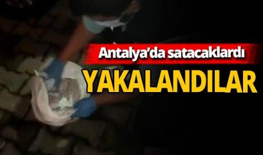 Antalya haber: Torbacılara ulaşmadan yakalandı