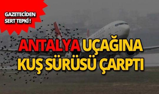 Antalya uçağına kuş sürüsü çarptı!