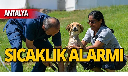Antalya yanıyor! Sokak hayvanları için alarm verildi
