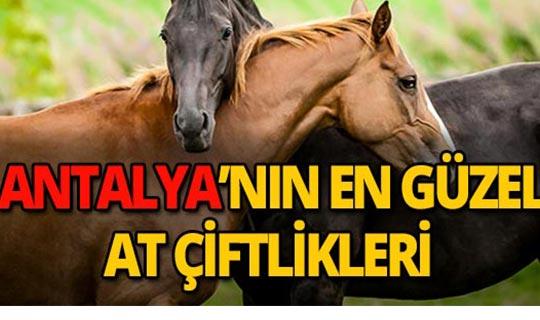 Antalya'da at çiftlikleri