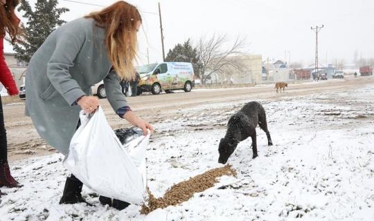 Belediye ekipleri ile üniversiteliler sokak hayvanlarını besledi
