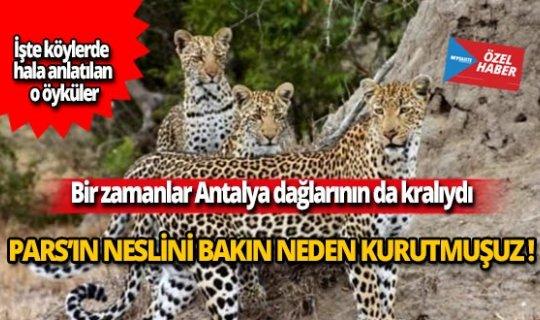 Bir zamanlar Antalya dağlarının kralıydı!