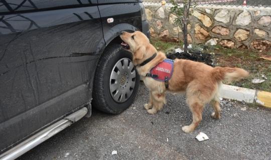 Dedektör köpek 'Badem' didik didik arıyor