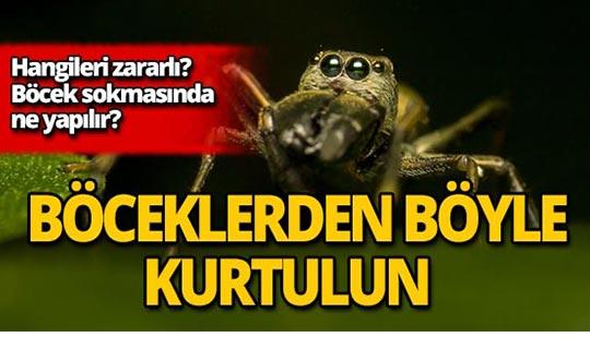 Evde çıkan böcek çeşitleri nelerdir? Zararlı mıdır?