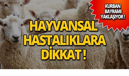 Uzmanlar hayvansal hastalıklara karşı uyardı!