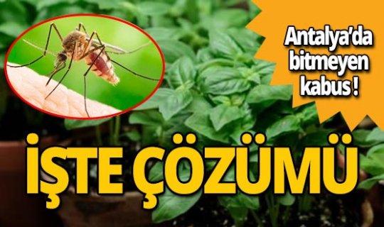 Kabustan kurtulun! İşte en iyi sivrisinek kovucu