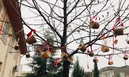Kahtalı öğrenciler kuşlar için ağaçlara yem astı