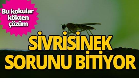Sivrisineklerden kurtulma yolları