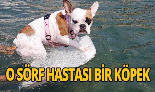 Sörf hastası bir köpek