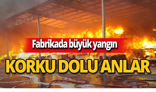 Sünger fabrikasında yangın!