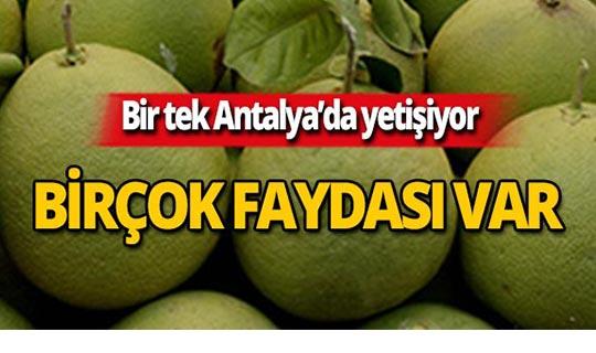 Türkiye'de bir tek Antalya'da yetişiyor! İnanılmaz faydaları var