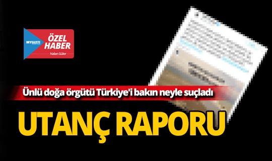 Doğa ve çevre örgütü WWF-Türkiye'den çarpıcı iddia