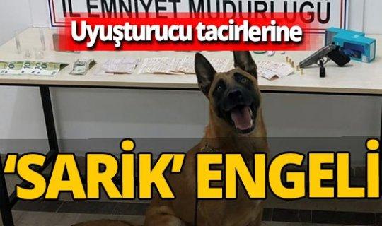 Uyuşturucular narkotik köpeği Sarik'e takıldı