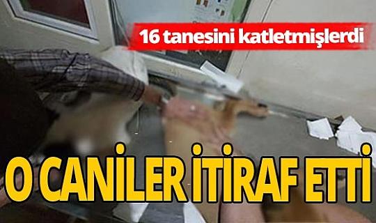16 köpek katili caniler yakalandı!