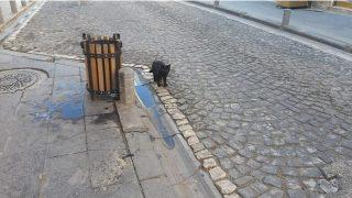 Sokağa çıkma kısıtlaması nedeniyle sokaklar kedi ve köpeklere kaldı